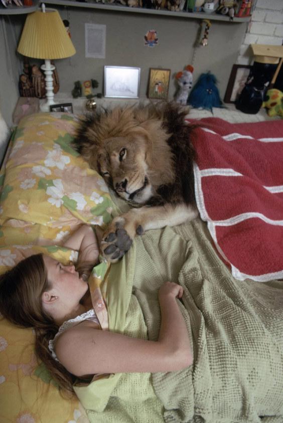 lion-home-02