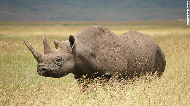 111110012209-black-rhino-extinct-conservation-horizontal-gallery