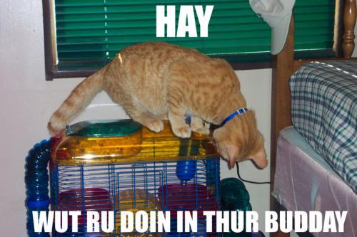 haybuddy.jpg
