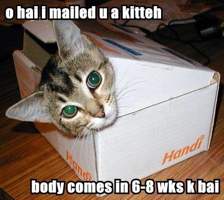 kitten_in_a_box_worded-igloo.jpg