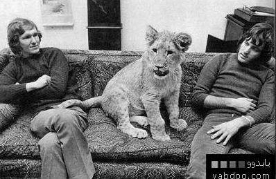 liondudesimageimage.jpg