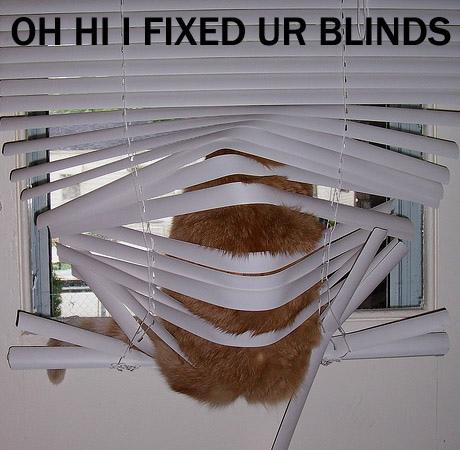 ohhiifixedurblinds-kittydemedici.jpg