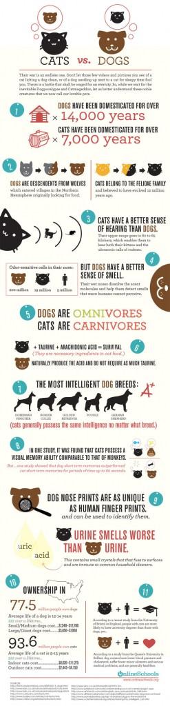 onlineschool_cats-vs-dogs