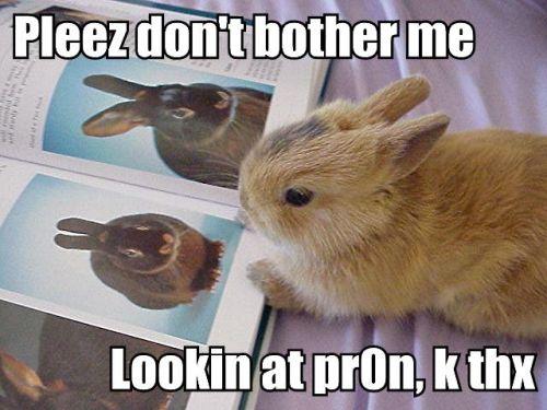 pleez-dont-bother-me-lookin-at-pr0n-k-thx.jpg