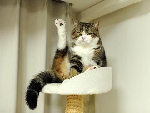 Hasil gambar untuk arrogant cat photo