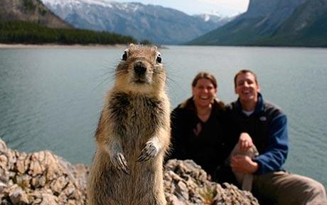 squirrel460_1461341c